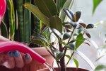 Комнатные растения, скриншот: YouTube