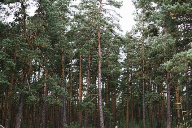 У лісі під Харковом виявили обгризені людські кістки