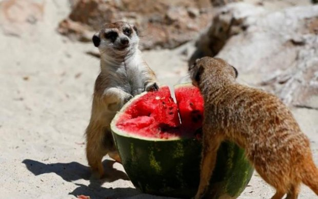 Як мешканців зоопарку рятують від спеки: фото