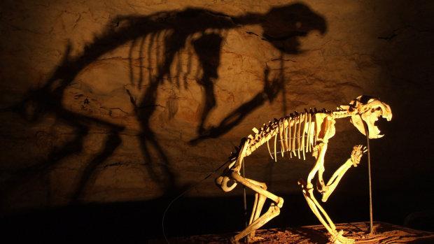 """Цепочка эволюции больше не будет прежней: обнаружили опасного кровожадного гиганта с """"сумкой"""""""