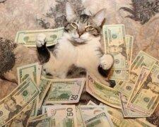 Котик купается в деньгах, Twitter