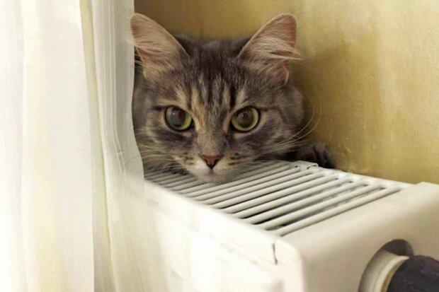 Холодний сезон: скільки киян все ще мерзнуть у квартирах без опалення
