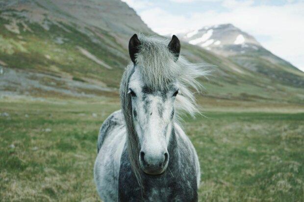 лошадь, фото Pxhere