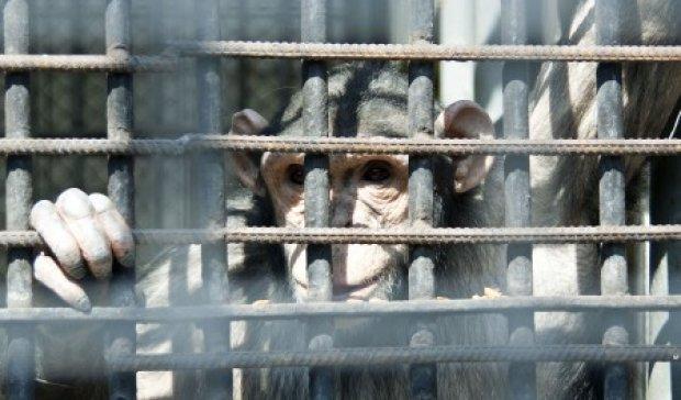 """У Тернополі """"зелені"""" активісти бойкотують виставку мавп"""