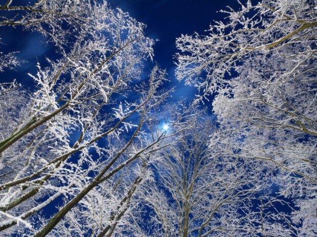 """""""Місячне світло в зимовому лісі""""» Сендай, Японія Фото: Yoshiaki Sato / via WMO"""