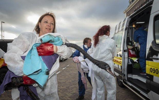 Екологічна катастрофа та узбережжі Нідерландів