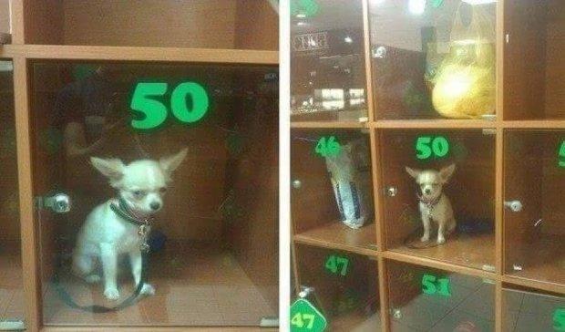 Кияни залишають собак у камерах зберігання супермаркетів