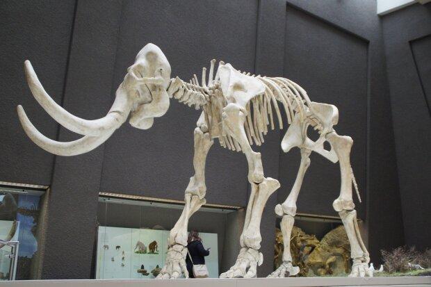 кости мамонта, фото Pxhere