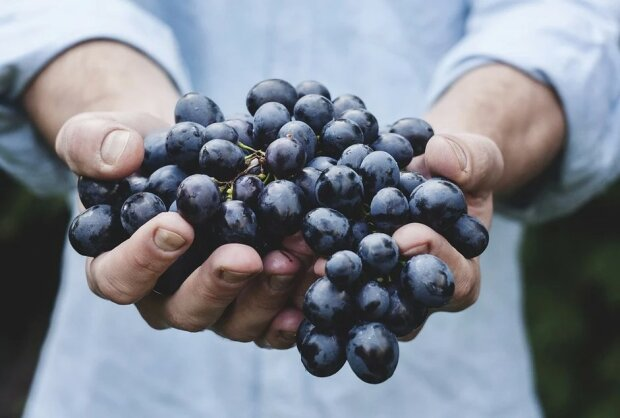 Виноград, фото: Pixabay