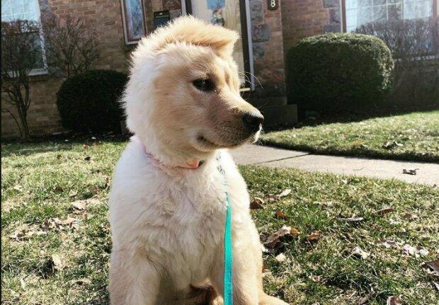 щенок Рей, фото: Instagram