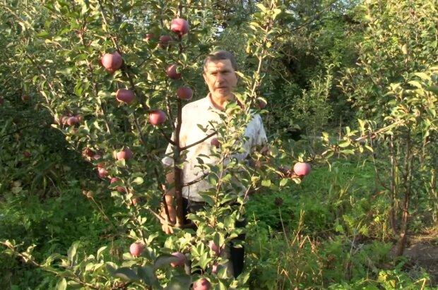 Яблуня, фото YouTube