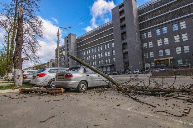 В Харькове дерево раздавило припаркованную легковушку, кадры дорожного хоррора