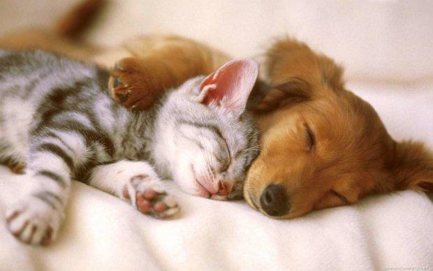 Отважный пес спас тонущую в фонтане кошку, покорив сердца миллионов. Это видео можно пересматривать бесконечно