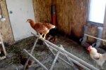 Курицы, скриншот: YouTube