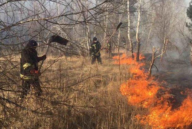 Пожар в Чернобыльской зоне, фото: ГСЧС