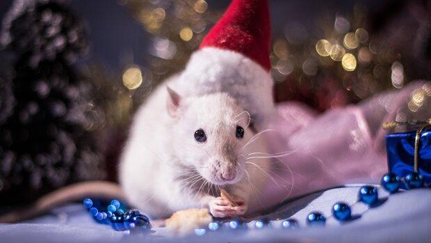 Новый год Металлической Крысы 2020: как правильно встретить праздник