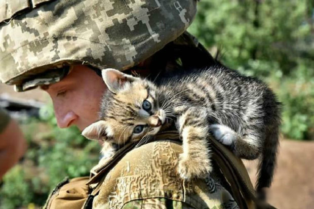 Кто из них котик? Украинские герои показали пушистых любимцев, сеть разрывает от эмоций