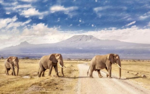 """Вчені підрахували, скільки рослин """"садять"""" слони"""