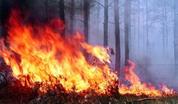 Столица Бурятии в огненной ловушке (видео)