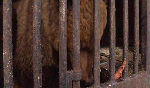 Люди спасли животных зоопарка от голодной смерти