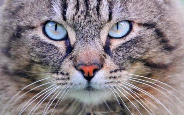 Кот разрушил планы ночного грабителя