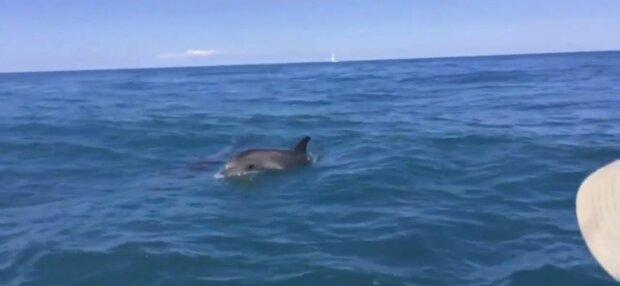 В Кирилловке смелый дельфин пошалил с туристами - весельчак, ничего не боится