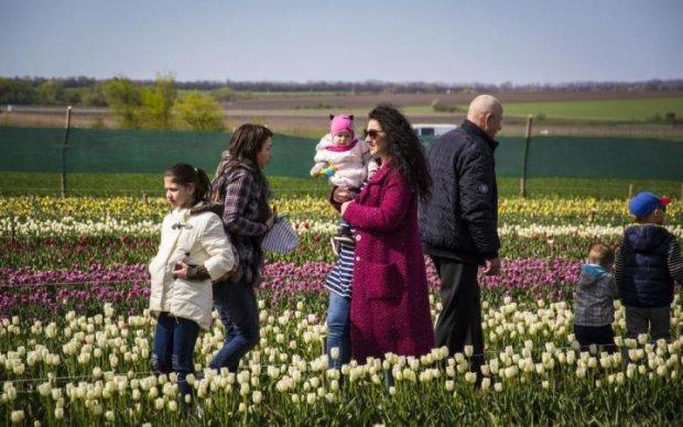 Ви повинні це побачити: в мережі показали неймовірне тюльпанове поле, створене українцем