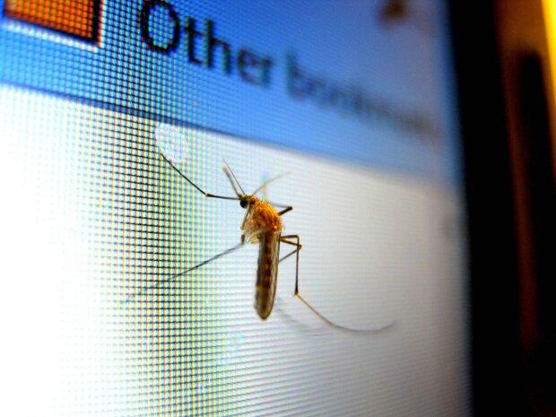 комар, фото Pxhere
