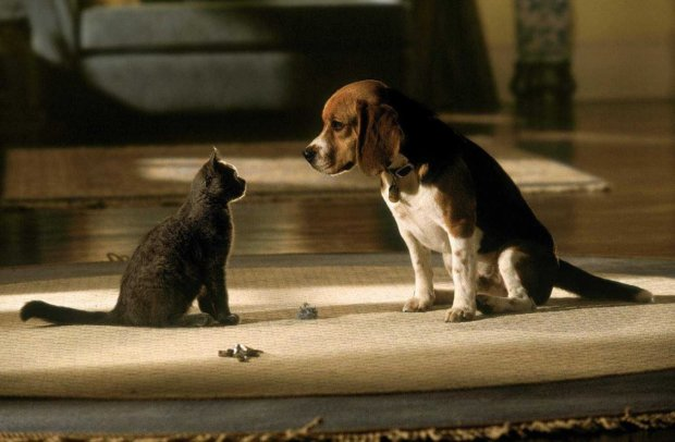 """Собака позбавив кішку """"батьківських прав"""", тваринний світ диктує нові правила: відеохіт"""