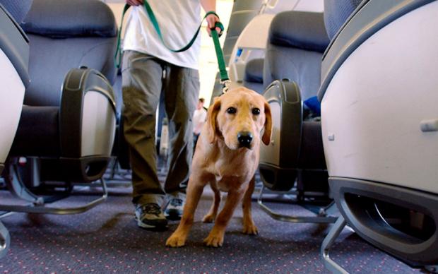 Взбешенный пес едва не загрыз собственную хозяйку: шокирующие подробности
