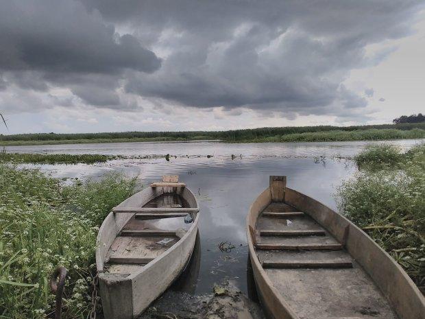Бобри знищують Волинь, цілі міста можуть піти під воду: люди б'ють на сполох, катастрофа вже на порозі