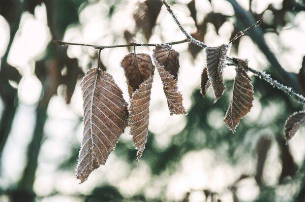 Потепління готує неприємний сюрприз одеситам 14 грудня