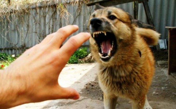 Харківщину атакував сказ: напівмертві тварини нападають просто на вулицях, будьте напоготові
