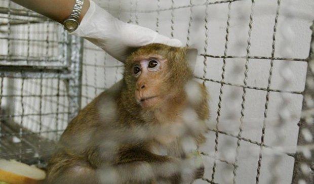 Ученые впервые объединили мозг обезьяны и живой компьютер