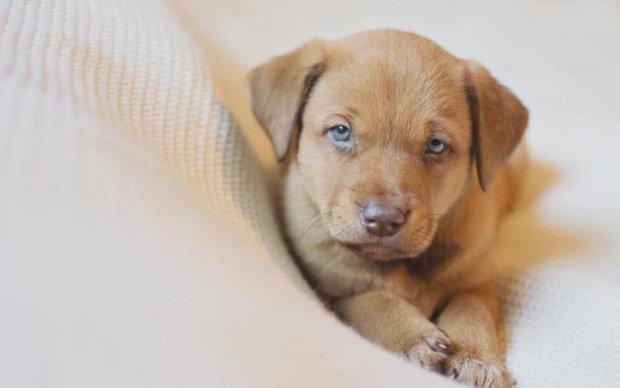 Шокирующее зверство: малолетние живодеры довели щенка до судорог