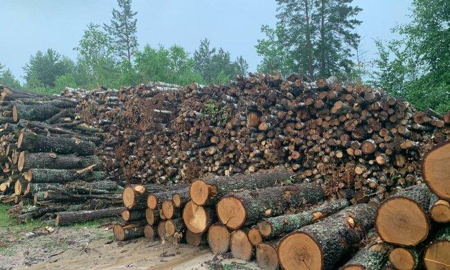 вирубка лісів, деревина, кругляк \\ фото Держекоінспекція
