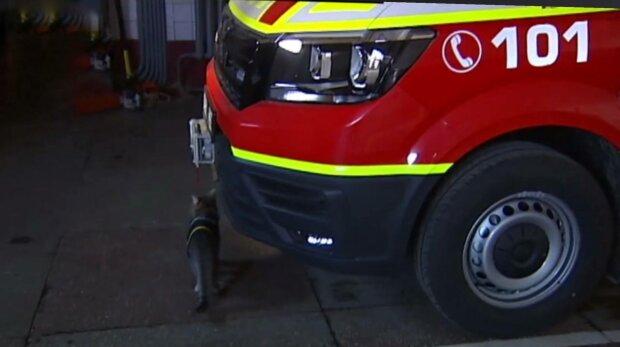 Кот-спасатель, фото: скриншот из видео