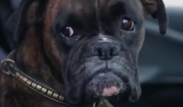 Мережу підкорив пес-паркувальник (відео)