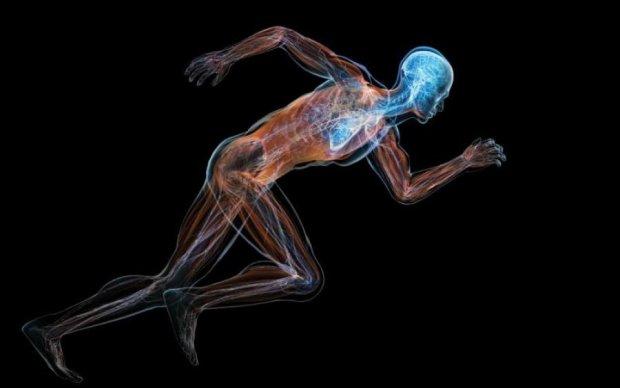 Анатомию человека впервые показали в 3D: видео