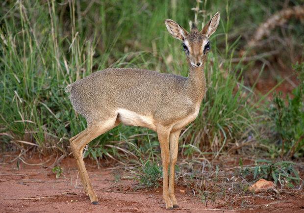 Мышь-олень, фото Пикабу