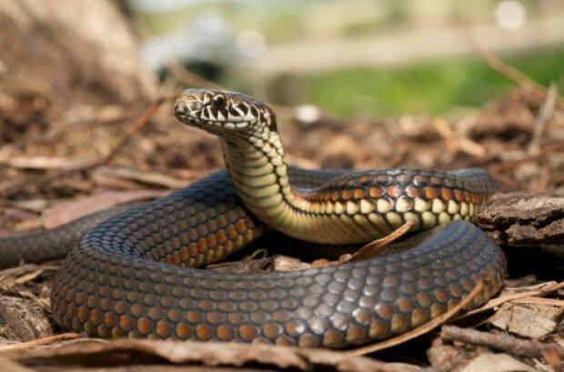 змея, фото: Getty Images