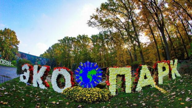 У каждого - своя трагедия: в харьковском парке поселились четверо крылатых красавцев