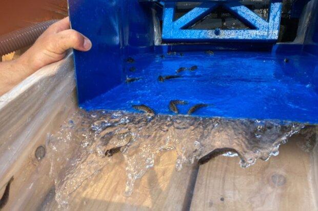 На Буковине начали вселения мальков лососевых видов рыб, фото facebook