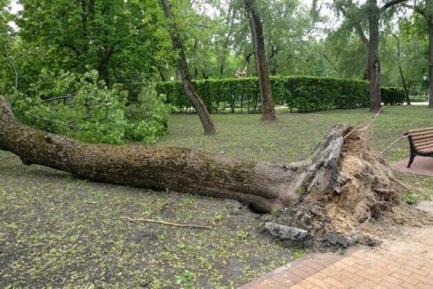 ураган в Черниговской области, фото с соцсетей
