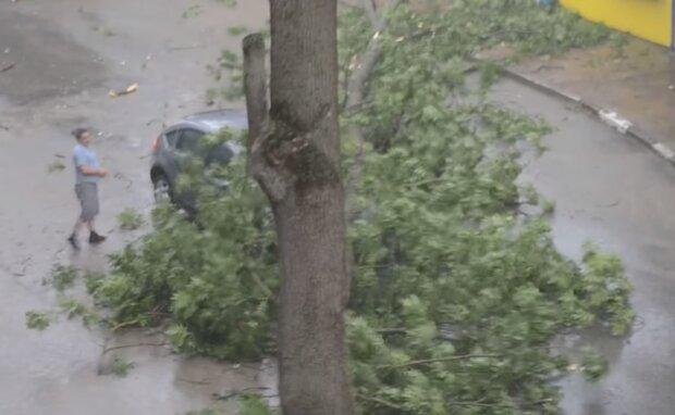 Диявольська стихія влаштувала деревопад на Тернопільщині - зламало як сірник і розчавило машину