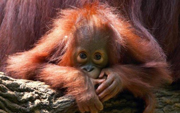 Под угрозой смерти: фото самых редких животных планеты
