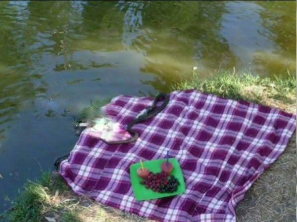 У Запоріжжі змія заповзла під покривало туристів - позеленіли, не було сил навіть пискнути