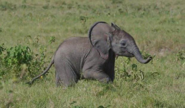 Шпион в дикой природе показал настоящую драму слоненка