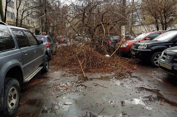 Украину штормит от мощного ветра: не выдерживают ни фуры, ни деревья