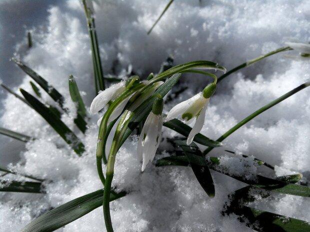 весна фото: pixabay